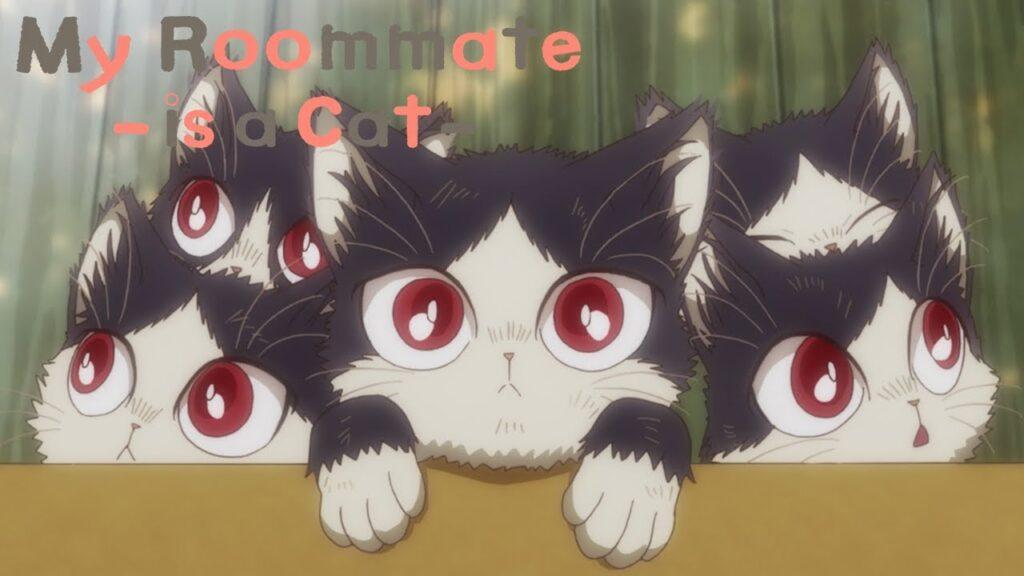 - My Roommate is a Cat Anime Tanıtım ve İnceleme - Figurex Anime Tanıtımları